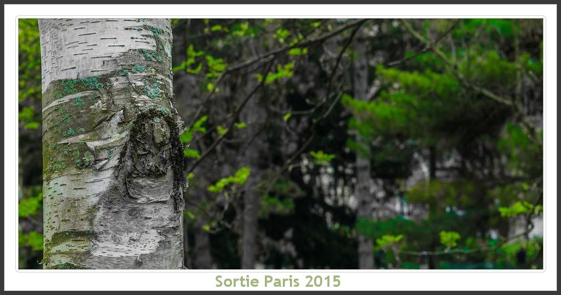 Sortie ANNIVERSAIRE 2015 PARIS 1I AVRIL. Paris_KparK_2015_01
