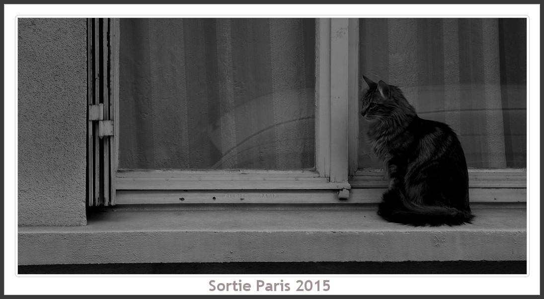 Sortie ANNIVERSAIRE 2015 PARIS 1I AVRIL. - Page 2 Paris_KparK_2015_08