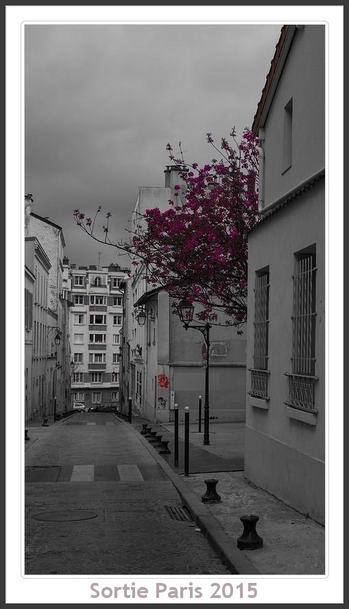 Sortie ANNIVERSAIRE 2015 PARIS 1I AVRIL. - Page 4 Paris_KparK_2015_15